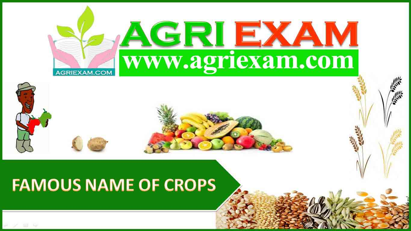 FAMOUS NAME OF CROPS